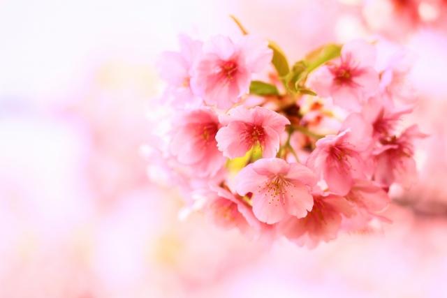 運命の出会いや結婚の直前に起きるスピリチュアル的前兆。ぞろ目、夢、ピンク?