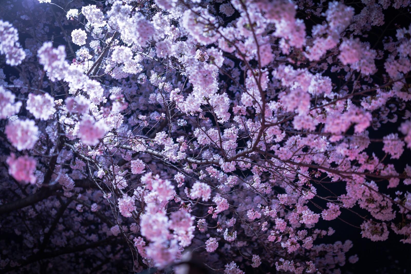 芳香現象のスピリチュアルで霊的意味。百合や金木犀などお花、お香、タバコ、悪臭。
